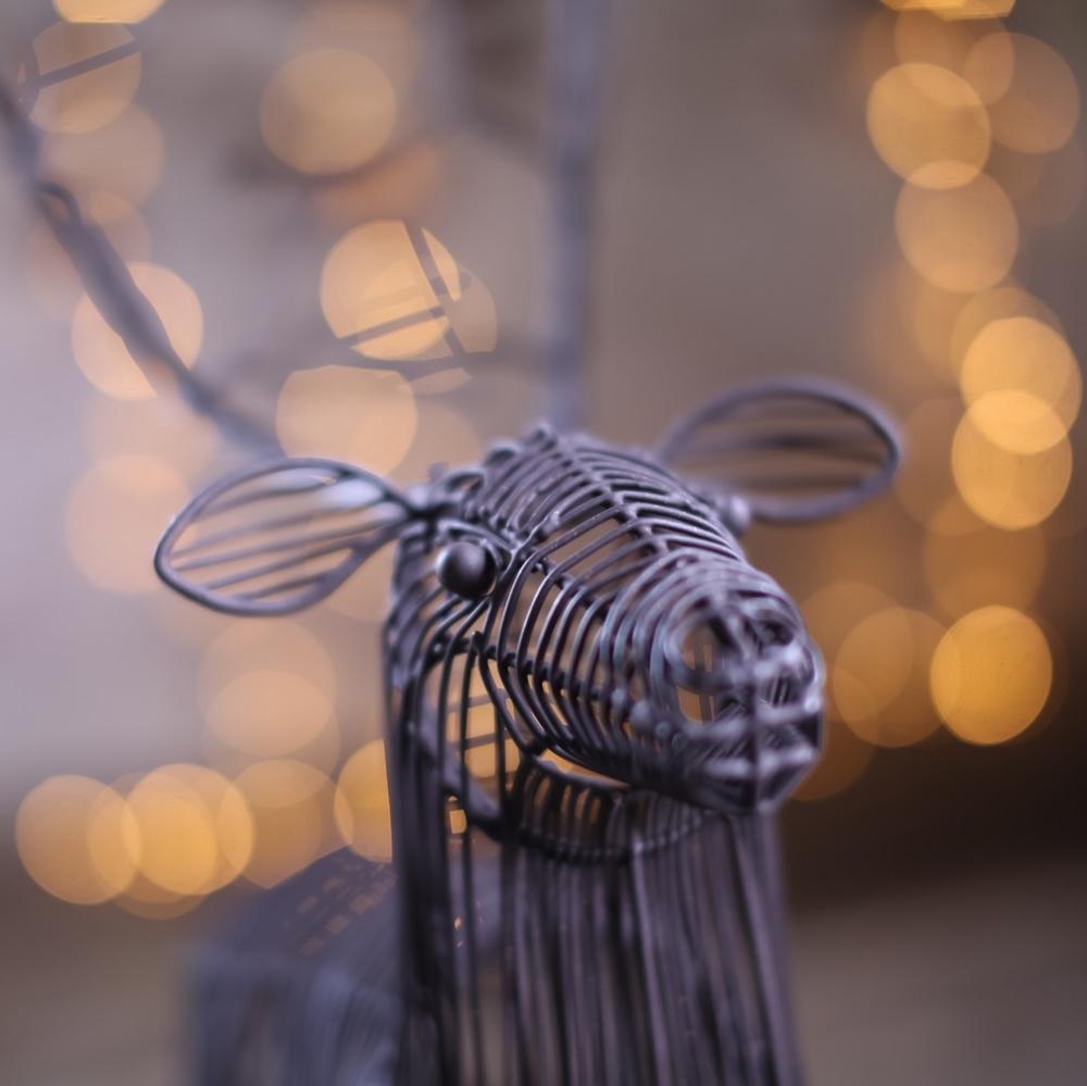 Reindeer_3